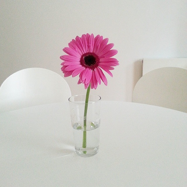 Come mantenere i fiori freschi più a lungo_5